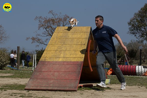 083 Open Day Action Dog 2015.jpg