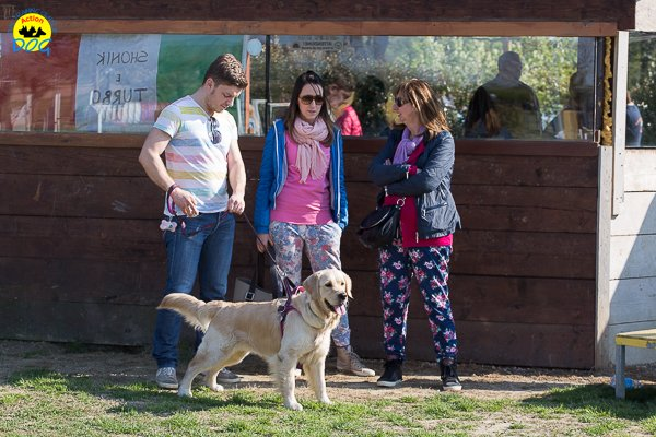 154 Open Day Action Dog 2015.jpg