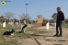 012 Open Day Action Dog 2015.jpg