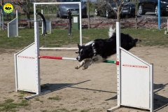 013 Open Day Action Dog 2015.jpg