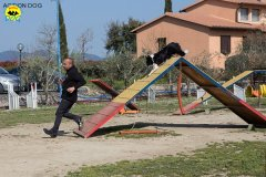014 Open Day Action Dog 2015.jpg