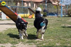 016 Open Day Action Dog 2015.jpg