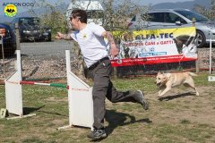 018 Open Day Action Dog 2015.jpg