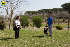 031 Open Day Action Dog 2015.jpg
