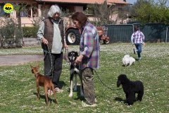 041 Open Day Action Dog 2015.jpg