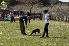 044 Open Day Action Dog 2015.jpg