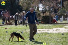 045 Open Day Action Dog 2015.jpg