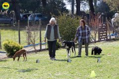 047 Open Day Action Dog 2015.jpg