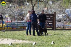 049 Open Day Action Dog 2015.jpg
