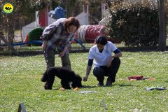 051 Open Day Action Dog 2015.jpg