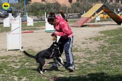 057 Open Day Action Dog 2015.jpg