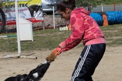 058 Open Day Action Dog 2015.jpg