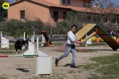 064 Open Day Action Dog 2015.jpg