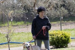 071 Open Day Action Dog 2015.jpg