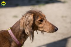 076 Open Day Action Dog 2015.jpg