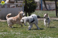 078 Open Day Action Dog 2015.jpg