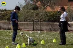 080 Open Day Action Dog 2015.jpg