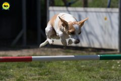 082 Open Day Action Dog 2015.jpg