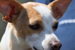 085 Open Day Action Dog 2015.jpg