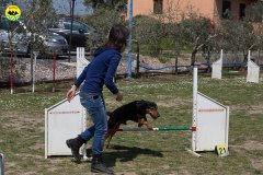086 Open Day Action Dog 2015.jpg