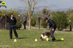 118 Open Day Action Dog 2015.jpg