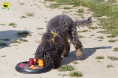 123 Open Day Action Dog 2015.jpg