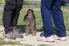 125 Open Day Action Dog 2015.jpg