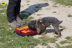 126 Open Day Action Dog 2015.jpg