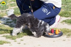 127 Open Day Action Dog 2015.jpg