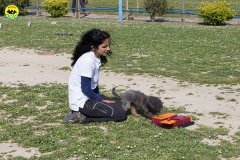 128 Open Day Action Dog 2015.jpg