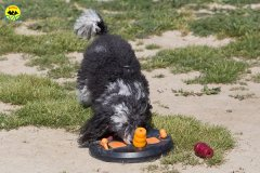 129 Open Day Action Dog 2015.jpg