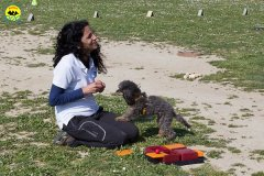 130 Open Day Action Dog 2015.jpg