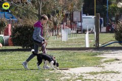 133 Open Day Action Dog 2015.jpg