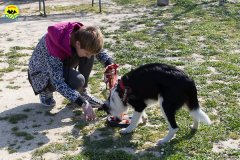 135 Open Day Action Dog 2015.jpg