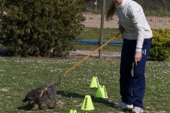 136 Open Day Action Dog 2015.jpg
