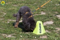 137 Open Day Action Dog 2015.jpg