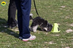 138 Open Day Action Dog 2015.jpg
