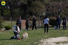 139 Open Day Action Dog 2015.jpg