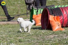 142 Open Day Action Dog 2015.jpg