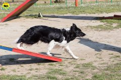 161 Open Day Action Dog 2015.jpg
