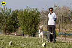 167 Open Day Action Dog 2015.jpg