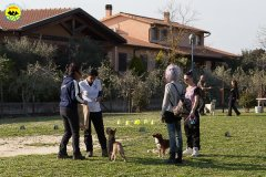 171 Open Day Action Dog 2015.jpg