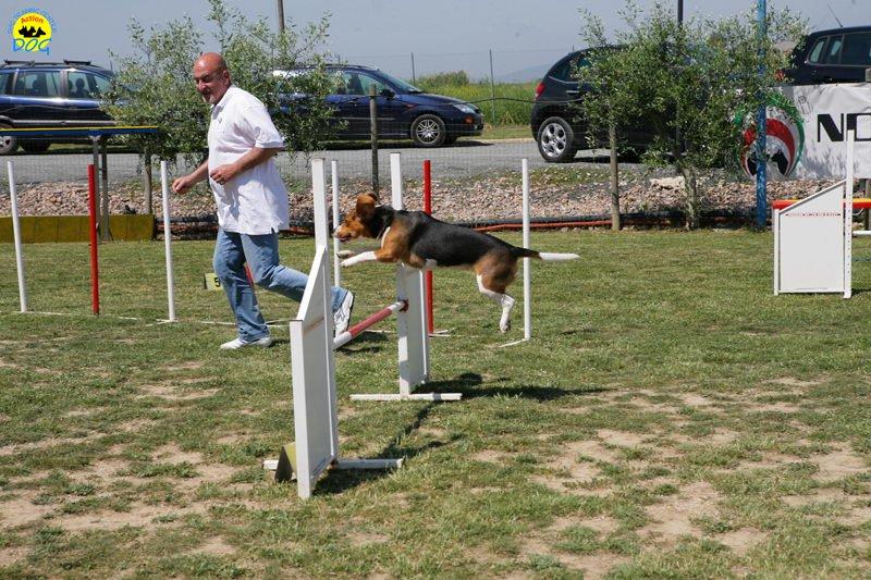 1-primo-trofeo-beagle-agility