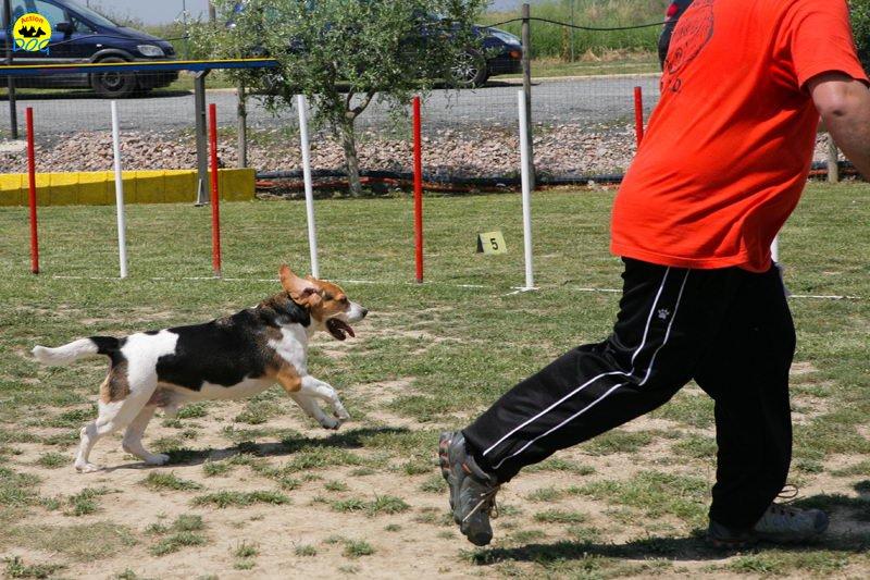 11-primo-trofeo-beagle-agility