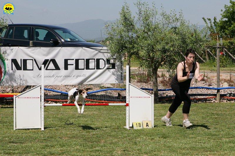 13-primo-trofeo-beagle-agility