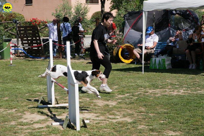 14-primo-trofeo-beagle-agility