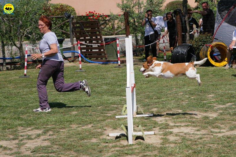 15-primo-trofeo-beagle-agility