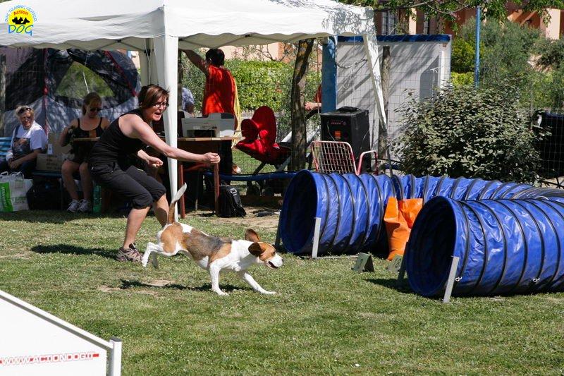 17-primo-trofeo-beagle-agility