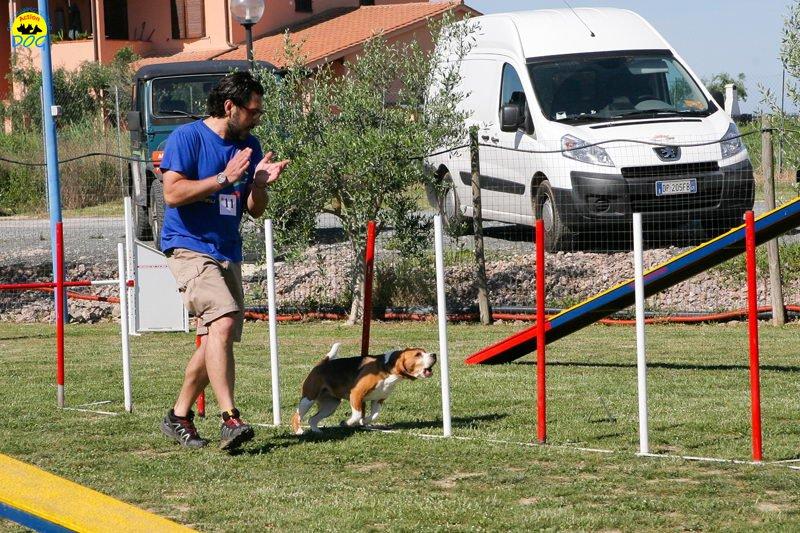 19-primo-trofeo-beagle-agility