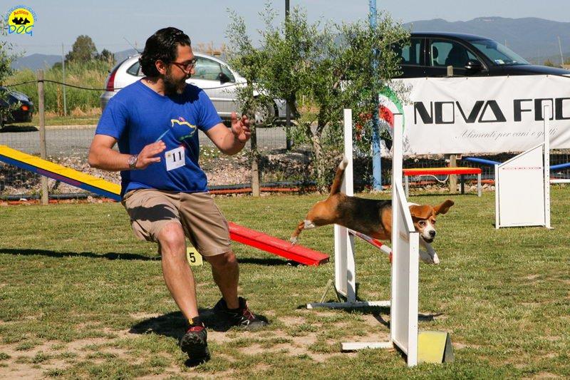 20-primo-trofeo-beagle-agility